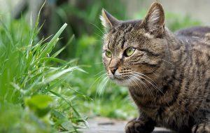 Аллергия — кошачья болезнь