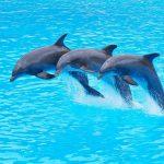 Как врачуют дельфины?