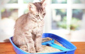 Выпадение шерсти у кошек: причины и лечение