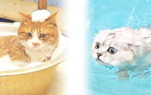 Вы знаете, почему кошки боятся воды?