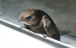 Птенец на дороге