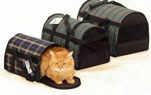 Как выбрать идеальную переноску для кота?