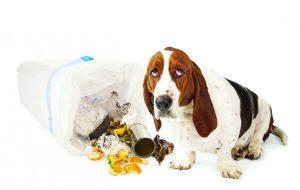 Лишний вес у собак, ожирение