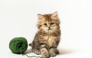 Как отучить кошку драть мебель и обои