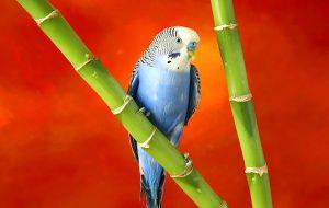 Яркое оперение птиц компенсирует их плохое пение