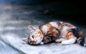 Вы подобрали котенка или щенка. Что делать?