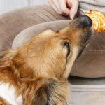 10 вещей, которые необходимо рассмотреть перед покупкой собаки