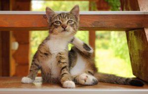 Кошка чешет уши: возможные причины