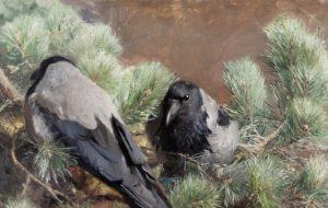 Почему врановые птицы — самые умные?