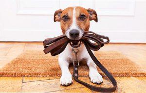 Как обучить собаку командам в домашних условиях