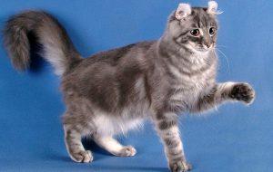 Пять причин завести кошку