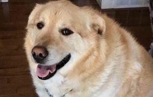 В России утвердили правила отлова собак