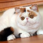 Как стричь когти кошке: эффективные советы для владельцев