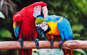 Как выбрать крылатого питомца: коротко о популярных видах попугаев