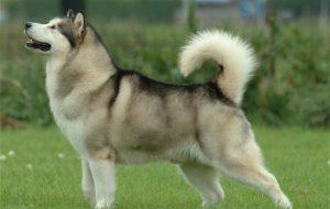 Лишай у собак: симптомы и лечение