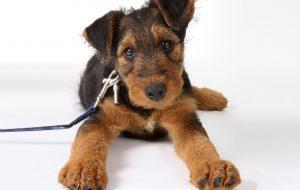 Подборка фактов о собаках