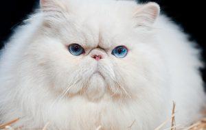 Почему кошки не пахнут
