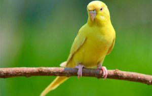 Почему у попугая кривой клюв?