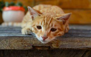 Ветеринары предупреждают: солевые лампы смертельно опасны для домашних животных