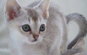 Расческа-фурминатор для кошек