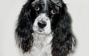 Общие правила мытья собак