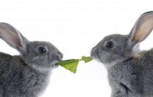 Как подобрать корм для кроликов