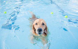 Глисты в сердце собаки: как избежать дирофиляриоз