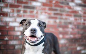 Проблема собак бойцовских пород – миф или правда