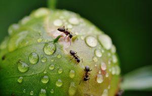 Как видят и слышат муравьи?