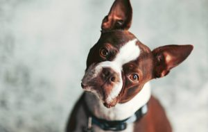 Аллергия у собаки: 7 признаков, которые нужно знать каждому владельцу