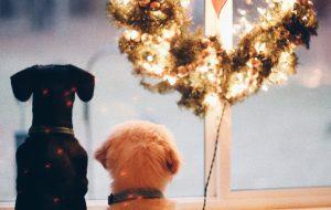 Страх салютов: инструкция о том, как себя вести, если вы хозяин пугливой собаки