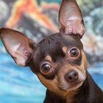 8 простых способов сохранить лай вашей собаки