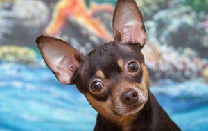 Факты о собаках, которые вы могли не знать