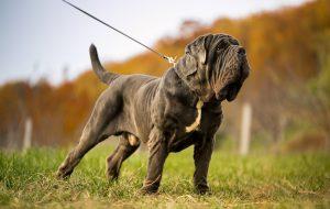 Как успокоить собаку в различных ситуациях