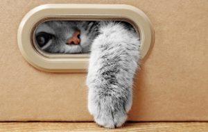 10 причин завести котенка