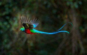 Какая птица самая красивая?