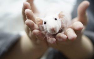 Необычный фестиваль о животных «Кошки-Мышки» снова пройдёт в Москве