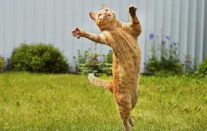 Еда без вреда: итоги проверки сухого корма для кошек