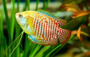 Зачем фильтровать аквариумную воду