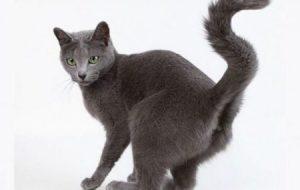 Как отучить кота метить территорию: причины этой привычки и действенные способы борьбы с ней