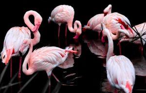 Каких экзотических животных можно встретить в Башкирии?