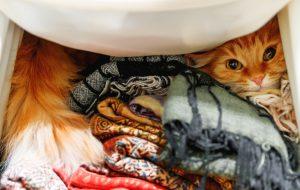 Почему кошки любят забираться в шкафы и ящики