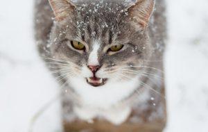 Кошачья агрессия: причины и последствия