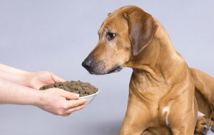 Чем можно кормить маленьких щенков