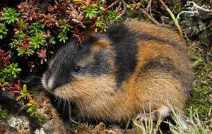 Роль фосфора в организме сельскохозяйственных животных