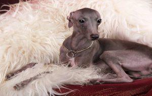 Какими удивительными качествами обладают собаки?