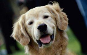 Лечение простуды в ветеринарной клинике