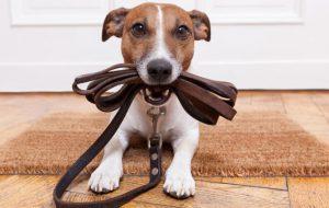Выгул собаки помогает донабрать норму физической активности