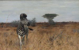 Зебра — белая с чёрным или чёрная с белым?