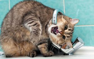 Почему кот пьет много воды